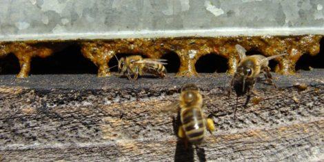 بره موم زنبور عسل