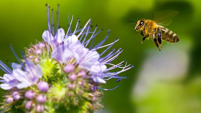 راز ماندگاری عسل